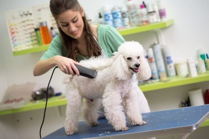 Reasons why grooming your dog is good for you and the dog